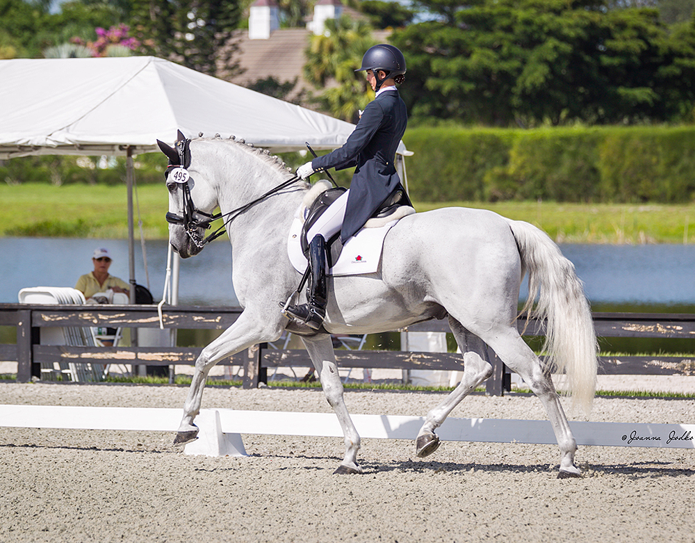 Legacy Farms Of Jupiter Horse Boarding Dressage And